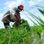 Ketahui Keselamatan Kerja dalam Sektor Pertanian
