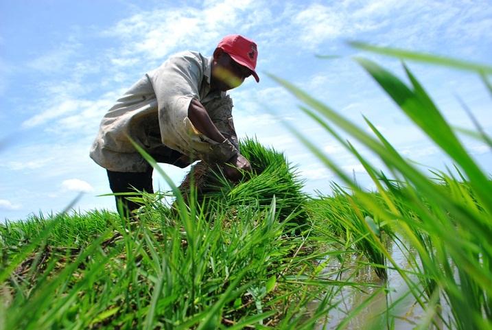 Keselamatan Kerja dalam Sektor Pertanian