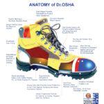 ANATOMY DR OSHA